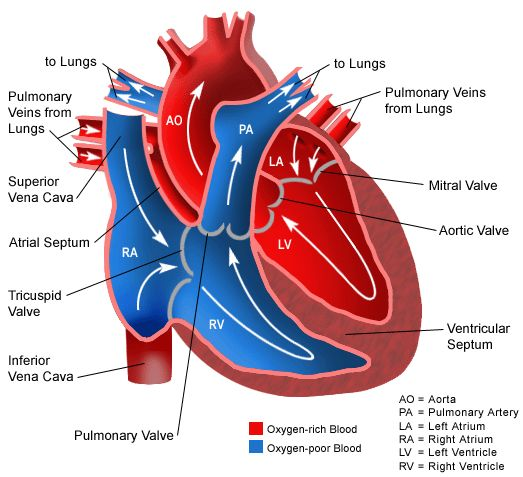 What is Pulmonary Arterial Hypertension